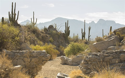 Hiking path through ancient wall structures with mountain and saguaros in background