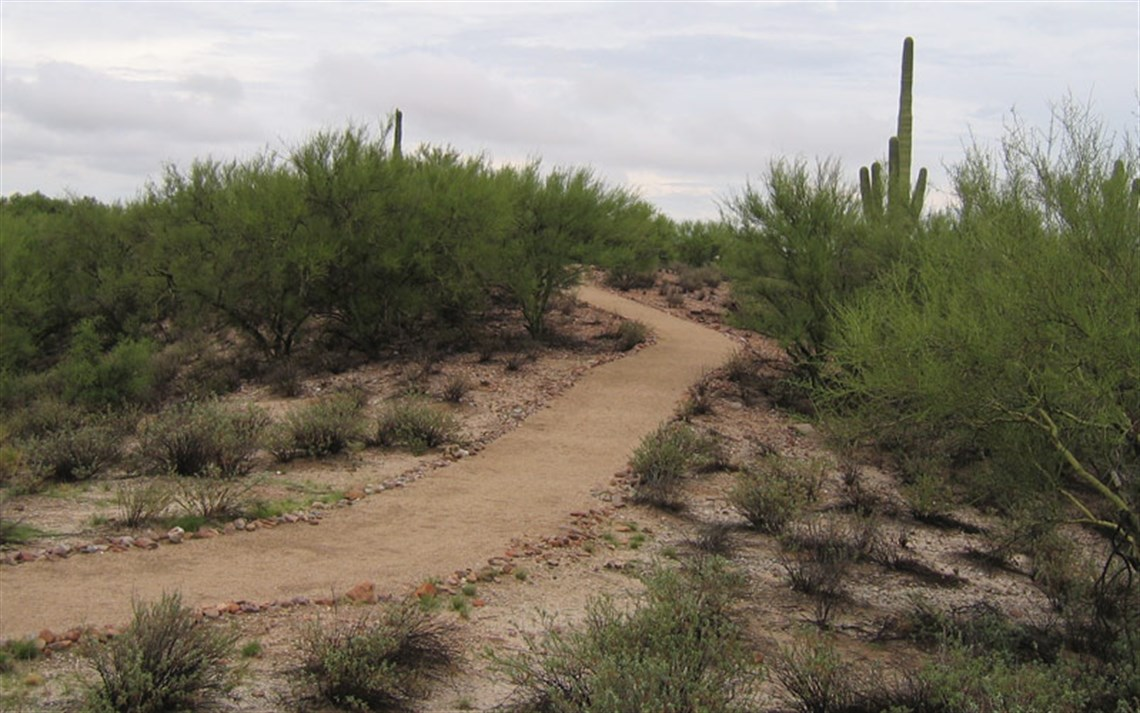 Walking trail on hillside filled with palo verde trees and desert scrub brush with saguaro rising in distance